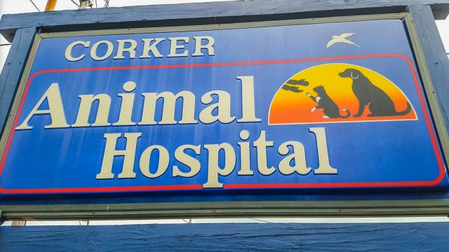 Corker Animal Hospital